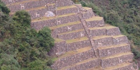 Llama terraces at choquequirao