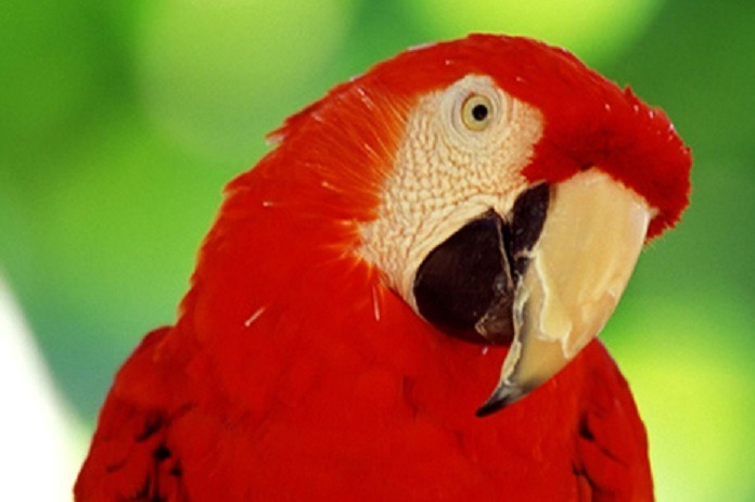Take a short Brazil vacation with Southern Crossings, including parrots and macaws in the Pantanal Jungle.