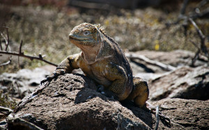 Add-on: Galapagos islands cruise