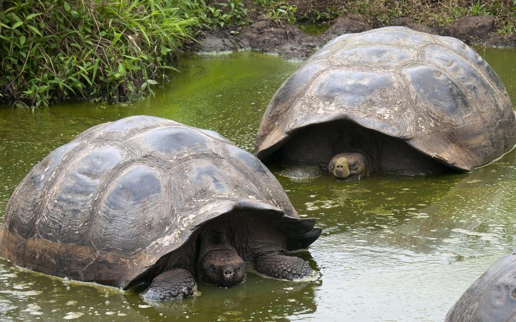 galapagos tour tortoise reserve